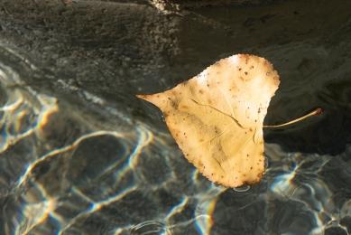Agua otoño hoja 6